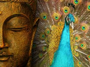 buddhakrsna