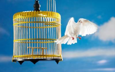 bird_cage_flying-400x250