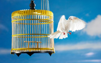 bird_cage_flying-400x250